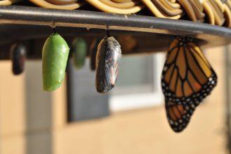 Image of butterfly metamorphosis