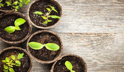 Garden Space - People Development Magazine